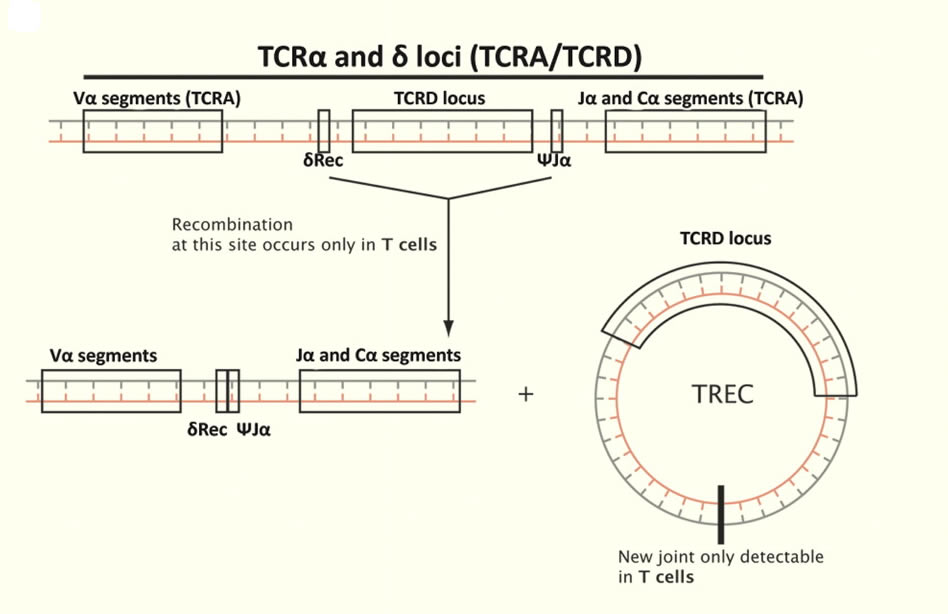 Схема формирования TREC